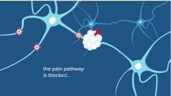 Virus (SARS-CoV-2) se svým spike proteinem (červeně) váže na neuropilin ve stejném místě, jako krevními destičkami produkovaný VEGF. Výsledkem je zablokování přenosu signálů bolesti. (Kredit: University of Arizona Health Sciences / Debra Bowles)