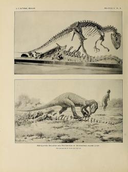 Dnes již silně zastaralá obrazová rekonstrukce vzezření alosaura, vytvořená umělcem Charlesem R. Knightem podle kostry vystavené v expozici Národního muzea přírodní historie ve Washingtonu, D. C. V jedné věci se autoři expozice nespletli – tito velcí jurští masožravci se skutečně rádi přiživovali na mršinách obřích sauropodů. Kredit: Charles W. Gilmore (1920); Wikipedia (volné dílo)