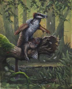 Hypotetická rekonstrukce dakotaraptora jako ptákům velmi podobného teropoda, pojídajícího svoji kořist na ulomeném kmeni stromu. O potravních návycích a paleoekologii tohoto maniraptora však zatím s jistotou téměř nic nevíme. Je ale pravděpodobné, že lovil v malých smečkách a svoji kořist mohl uštvat dlouhým pronásledováním, podobně jako dnešní vlci. Kredit: Emily Willoughby, Wikipedie (licence CC BY-SA 4.0)