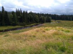 Jedna z nejkrásnějších částí Šumavy nedaleko Modravy (foto Vladimír Wagner).