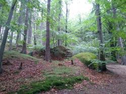 Les v Jizerských horách (foto Vladimír Wagner).