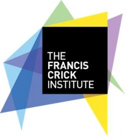 Francis Crick Institute 13