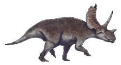 Nejvíce dinosauřích rodových jmen začíná na písmeno A (k 1. 7. 2019 celkem u 155 druhů). Jedním z nich je také středně velký chasmosaurinní ceratopsid Agujaceratops mariscalensis, formálně popsaný v roce 1989 nejdříve jako Chasmosaurus mariscalensis. V roce 2006 pak tento rohatý dinosaurus z pozdní křídy Texasu obdržel své aktuální rodové jméno. Kredit: R. Kunz, R. Slaterová; Wikipedie (CC BY-SA 3.0)