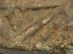 Pravděpodobně živočišné stopy Planolites v křemencovém souvku ze spodního kambria.  Kredit: Aleš Uhlíř.
