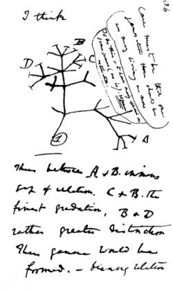 Slavný první Darwinův evoluční strom. Kredit: Ch. Darwin.