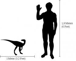 Eoraptor skutečně své obří sauropodní příbuzné z pozdějších dob příliš nepřipomíná. Dosahoval velikosti průměrného psa a vážil zhruba 10 000krát méně než obří titanosauři. Kredit: Marmalade, licence CC BY-SA 2.5 (Wikipedie)