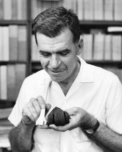 Americký paleontolog a ornitolog Pierce Brodkorb, který jako jeden z prvních pochopil, že rumunské fosílie nepředstavují pozůstatky obřích křídových sov. Zde drží kostní element (tarzometatarzus) obřího nelétavého ptáka titanise v porovnání s kostí současného ptáka. Kredit: Sadads, Smithsonian Institution Archives, Wikipedie