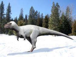 """Rekonstrukce možného vzezření """"trpasličího"""" tyranosaurida druhu Nanuqsaurus hoglundi, vědecky popsaného roku 2014. Tento menší aljašský druh zřejmě obýval chladné oblasti a musel být tedy těmto ztíženým klimatickým podmínkám přizpůsoben. Kredit: Nobu Tamura, Wikipedie (CC BY-SA 4.0)"""