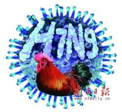 Ptačí chřipka H7N9. Kredit: nfdaily.