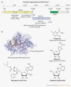 Na RNA-dependentní RNA polymerázu cílí některé potenciální léky, včetně remdesiviru. Kredit: Li & De Clercq (2020), Nature Reviews.