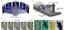 3D tisk metodou CAL. Kredit: Kelly et al. (2019), Science.