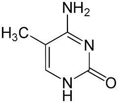 5-methyl cytosin