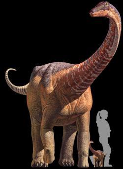 Dospělý jedinec a několik týdnů staré mládě sauropoda rapetosaura ve velikostním porovnání s průměrně vysokou ženou. Kredit: Kristina Curry Rodgers