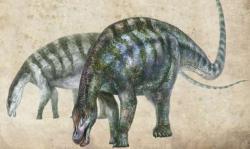 Rekonstrukce pravděpodobného vzezření nejstaršího známého neosauropoda, který dostal vědecké jméno Lingwulong shenqi. Tento asi 15 metrů dlouhý dinosaurus dokazuje, že vyspělejší vývojové skupiny sauropodů se na Zemi objevily asi o 15 milionů let dříve, než se dosud předpokládalo. Kredit: Zhang Zongda