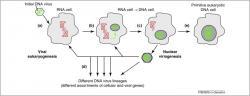 Jak mohly viry postavit DNA organismy? Kredit: Claverie & Abergel (2010), Trends in Genetics.