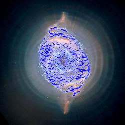 Kompozit snímku NGC 6543 z Hbbleova teleskopu - modře jsou zvýrazněny oblasti, které snímaly detektory sondy Gaia.  Kredit: NASA/ESA/HEIC/The Hubble Heritage Team/STScI/AURA (background image); ESA/Gaia/DPAC/UB/IEEC (blue points)