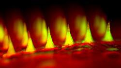 Jehličky v detailu skenovacího mikroskopu. (Kredit: J. Yu a kol.)
