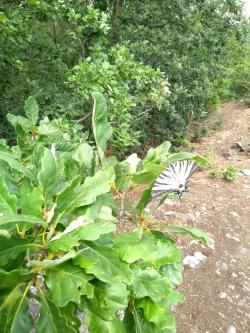 Za přírodou stačí vyjít i jen kousek za Prahu do Tichého údolí u Roztok (foto Vladimír Wagner).