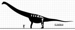 Ilustrace zobrazuje velikost dochovaných kosterních částí argentinosaura (chybí ovšem kost pažní) a přibližné celkové rozměry tohoto obřího sauropodního dinosaura. I nejkonzervativnější odhady hmotnosti odpovídají zhruba společné váze deseti dospělých slonů, ty nejodvážnější pak dokonce dvojnásobku. Kredit: Slate Weasel, Wikipedie (volné dílo).