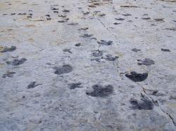 Podobné fosilní stopy druhohorních dinosaurů utvrzovaly dávné Číňany (ale také evropské poutníky v Portugalsku, severoamerické Indiány, jihoafrické Sany a domorodé Austrálce) ve víře v magickou silou obdařené mocné bytosti, draky nebo obří ptáky. Kredit: Footwarrior, Wikipedie (CC BY-SA 3.0)