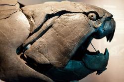 Ve vymíráním na konci devonu skončili i ikoničtí vrcholoví predátoři, pancířnaté ryby rodu Dunkleosteus. Kredit: Neil Conway / Wikimedia Commons.