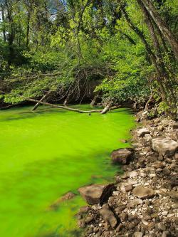Ukázka eutrofizace v malém měřítku, v tomto případě na řece Potomac na východě USA. Po dopadu asteroidu Chicxulub byl podobný obrázek pravděpodobně běžný na mnoha místech planety, a to zdaleka nejen ve sladkých vodách. Kredit: A. Trubetskoy, Wikipedie (CC BY-SA 3.0)