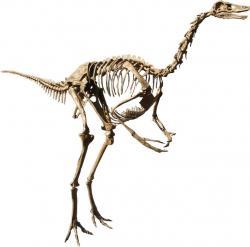 Možná posledními přímými svědky zkázonosného dopadu planetky bylipštrosí dinosauři (ornitomimidi), žijící před 66 miliony let na jihu Laramidie, tedy zhruba oblasti dnešního Nového Mexika a Texasu.Kredit:MCDinosaurhunter, Wikipedie (CC BY-SA 3.0)