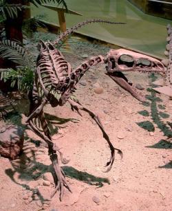 Suskityrannus byl po dlouhá léta označován za blíže neidentifikovatelného célurosaura nebo konkrétněji za dromeosaurida. Teprve detailní srovnávací výzkum odhalil, že ve skutečnosti patřil do podčeledi Tyrannosauroidea. Po druzích Dynamoterror dynastes a Moros intrepidus je tak dalším z řady nově popsaných zástupců této skupiny teropodů. Kredit: Greg Goebel; Wikipedie (CC BY-SA 2.0)