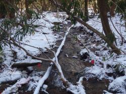 Na první pohled se nezdá, že z živé vody protékající lesnatou krajinou, se stala voda mrtvá. (Kredit: UG)