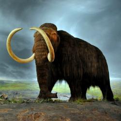 Dočkáme se živých mamutů? Kredit: Flying Puffin / Wikimedia Commons.