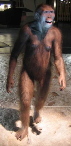 Australopithecus model. Hominid, vývojová linie moderního člověka.