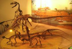 Kosterní exponáty dospělce a mláďat ornitopoda druhu Tenontosaurus tilletti a útočícího dromeosaurida druhu Deinonychuis antirrhopus. Podle dřívějších představ útočili tito menší teropodi na svoji větší kořist společně a organizovaně ve smečkách. Nový výzkum ale ukazuje, že ve skutečnosti se chovali spíše jako nekoordinovaně útočící varani komodští. Kredit: Daderot; Wikipedie (volné dílo)