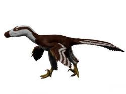 Mezi teropody známé ze souvrství Hell Creek patří i menší dromeosaurid Acheroraptor temertyorum, vědecky popsaný roku 2013 z Montany. Kredit: Nobu Tamura, Wikipedie (CC BY-SA 4.0)