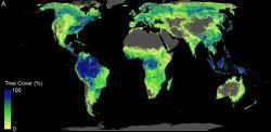 Celková plocha vhodná k výsadbě stromů. Kredit: ETH Zurich/Crowther Lab.