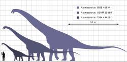 """Zatímco dříve objevené exempláře ukazovaly pouze na """"střední"""" velikost, novější fosilní materiál popsaný roku 2011 poukazuje na skutečně obří rozměry alamosaurů. Hmotnost největších jedinců nejspíš přesáhla 50 metrických tun, což odpovídá hmotnosti deseti slonů afrických. Kredit: Steveoc 86, Wikipedie (CC BY-SA 3.0)"""
