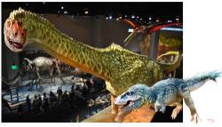 Rekonstrukce přibližného vzezření obou potenciálních dinosauřích duelantů, založená na kosterních exponátech v dallaském Perotově muzeu. I při hmotnosti kolem 7 tun byl tyranosaurus až desetkrát lehčí než obří titanosaurní sauropod. Je tak pravděpodobné, že tito hroziví dravci se specializovali spíše na lov mláďat nebo třeba nemocných a přestárlých jedinců alamosaura. Kredit: Luis V. Rey (využito se svolením autora).