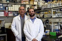 Alexandre Mayran a Jacques Drouin. Vpravo je první autor publikace o Pax7, který před několika dny vyšel v Nature Genetics. Na obrázku je se svým školitelem Drouinem, profesorem genetiky a odborníkem na řízení genové exprese. Kredit: IRCM.