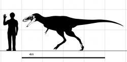 Diagram zobrazující siluetu a dochované fosilie holotypu A. remotus v porovnání s postavou dospělého člověka. První exemplář dinosaura dosahoval odhadované délky asi 5 až 6 metrů, šlo ale pravděpodobně o dosud plně nedorostlý exemplář. Stavbu těla tohoto rodu osvětlil objev lépe zachovaného jedince druhu A. altai v roce 2009. Kredit: Steveoc 86, Wikipedie (CC BY 3.0)