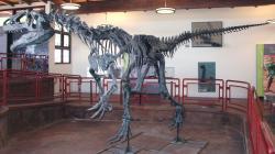 Allosaurus fragilis je zdaleka nejpočetnějším druhem dinosaura, objeveným na této lokalitě. Zde kostra vystavená v expozici muzea, umístěného přímo u lokality Cleveland-Lloyd Dinosaur Quarry. Kredit: James St. John, Wikipedie (CC BY 2.0)