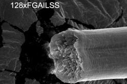 Polymerní amyloidové vlákno.(Kredit: Jingyao Li)
