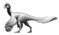 Dokonce ani opeření dinosauři schopní snášet dočasné snížení teplot nemohli přežít období drastického ochlazení o několik desítek stupňů Celsia, které trvalo řádově několik až několik desítek let. Zde Anzu wyliei, jeden z posledních žijících severoamerických oviraptorosaurů. Kredit: Fred Wierum, Wikipedie (CC BY-SA 4.0)