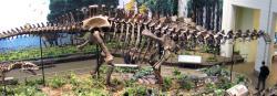 Boční pohled na kostru druhu Apatosaurus louisae, konkrétně exemplář CM 3018 (s replikou lebky jiného exempláře – CM 11162). Tato kostra představuje největšího známého suchozemského živočicha, u něhož máme k dispozici prakticky kompletní skelet. Hmotnost jeho původce, žijícího v období svrchní jury, činila dle Paula kolem 18 tun. Kredit: James St. John; Wikipedie (CC BY 2.0)