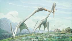 Rekonstrukce vzezření dvou jedinců obřího azdarchida druhu Arambourgiania philadelphiae, žijícího v období pozdní křídy na území velké části tehdejšího světa (zkameněliny byly objeveny na území současného Jordánska i Spojených států amerických). Objevený fragment fosilního krčního obratle tohoto pterosaura měří na délku 62 cm (v kompletním stavu by měl asi 78 cm), což odpovídá třímetrové délce krku a rozpětí křídel možná až kolem 12 metrů. Tento gigantický azdarchid se tak svojí velikostí vyrovnal rumunskému rodu Hatzegopteryx i seveoamerickému rodu Quetzalcoatlus. Kredit: Mark Witton; Wikipedie (CC BY-SA 4.0)