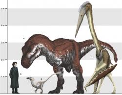 Ohromná velikost ptakoještěrů dobře vynikne při porovnání s velkým teropodem (Tyrannosaurus rex), menším teropodem (dromeosaurid Balaur bondoc) i člověkem. Při předpokládaném pohybu po zemi velcí azdarchidé dosahovali výšky žirafy. Kredit: Mark Witton (CC BY 2.0, Wikipedie)