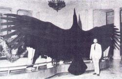Model argentavise v porovnání s velikostí dospělého člověka. Jako srovnání posloužil sám jeden z dvojice autorů vědeckého popisu tohoto pravěkého ptáka, Dr. Kenneth E. Campbell z Muzea přírodní historie v Los Angeles. Obřího teratorna formálně popsal spolu s argentinským kolegou Eduardem P. Tonnim v roce 1980. Kredit: Wangyonglee, Wikipedie (CC BY-SA 3.0)