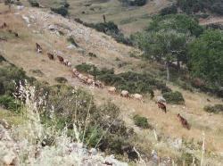 Kozy příslušné k osadě Lykaion. Vlků od antických časů nejspíš ubylo. Kredit: Zde, Wikimedia Commons.