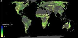Půda která je k dispozici pro výsadbu lesů (kromě pouští, zemědělských a městských oblastí; aktuální lesy nejsou uvedeny). Kredit: ETH Zurich/Crowther Lab.