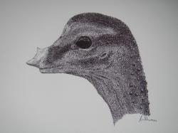 Obrazová rekonstrukce hlavy dosud nevylíhnutého sauropodího embrya. Tak nějak vypadal ještě nenarozený titanosaurní sauropod, který se zhruba před 80 miliony lety chystal k prvním krůčkům po nebezpečných křídových pevninách tehdejší Patagonie. Délka hlavy činí asi jen 2 centimetry, nápadný je rohovitý výrůstek na nosní části lebky, který po vylíhnutí pravděpodobně zakrněl a postupně zmizel. Autorem ilustrace je Vladimír Rimbala, použito s jeho svolením.