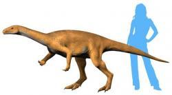 Přibližná rekonstrukce vzezření jednoho z nejstarších známých dinosaurů vůbec, sauropodomorfa druhu Bagualosaurus agudoensis. Tento menší býložravec žil na území dnešní Brazílie v době před asi 233 miliony let. Kredit: Nobu Tamura; Wikipedie (CC BY-SA 4.0)