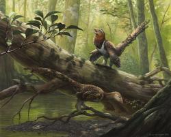 Opeřený teropod Balaur bondoc zpívá svoji ranní píseň v pralese na území ostrova Hateg před zhruba 70 miliony let. Dnes se na místě tohoto pradávného tropického ostrova nachází oblast rumunské župy Hunedoara. Kredit: Emily Willoughby, 2015 (Wikipedie, CC BY-SA 4.0).
